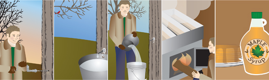 Five Steps to Maple Syrup