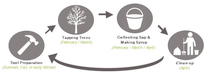 Maple Syrup Process Timeline Z-Orchard